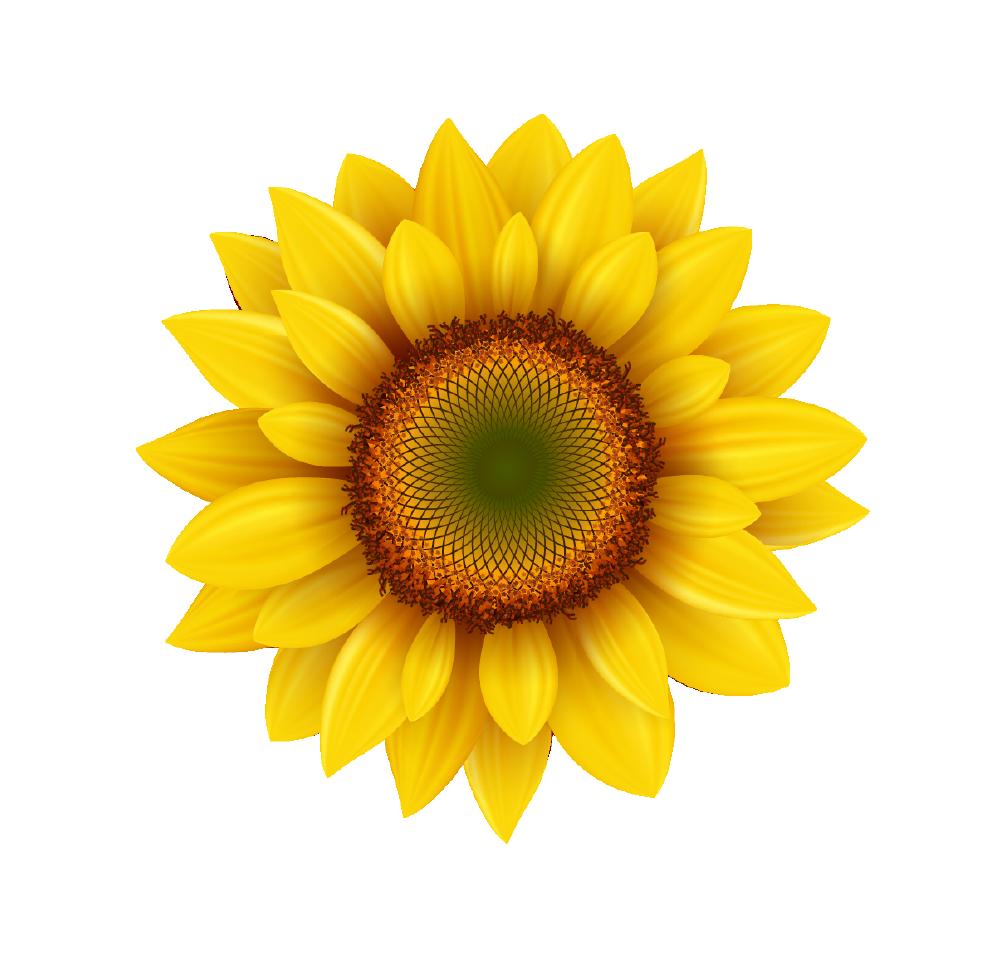 ACR133 Sunflower - Badge A-Peel